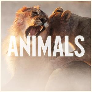 Maroon 5 animals клип скачать.